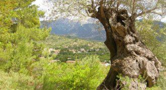 Großzügige Finca in der Gemeinde Mancor de la Vall mit traumhaften Blick auf das Dorf und auf das Tramuntana Gebirge